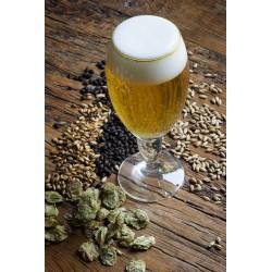 Kit Cerveza Artesanal Pilsen Ale para Principiantes